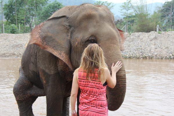 Elefánt farm2