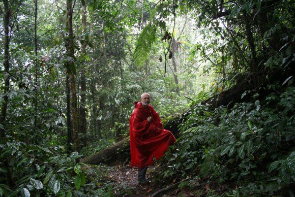 Malajzia_rejtőszínekben az esős esőerdőben