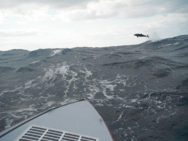 37.-Delfin-nyílt-vízen-1000x750-min