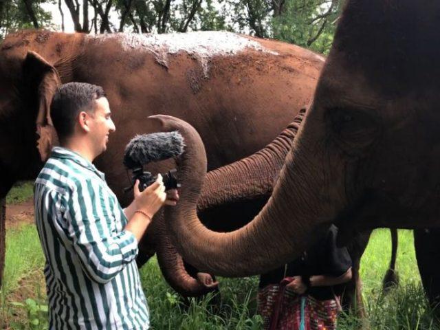 elefánt-és-a-kamera